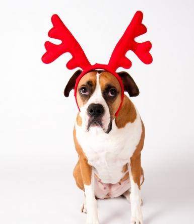 Allez avoue que Noël c'est la plaie!
